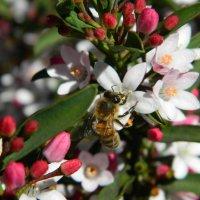 image birds-bees-006-jpg