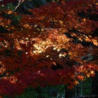 image flame-free-vivid-024-jpg