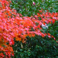 image flame-tree-009gimp-jpg